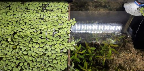aqua test & aquatic fern